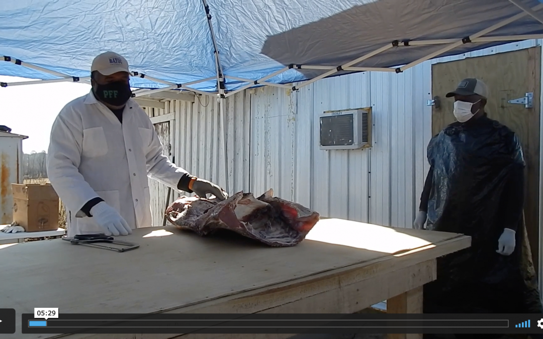 Beef Processing 101