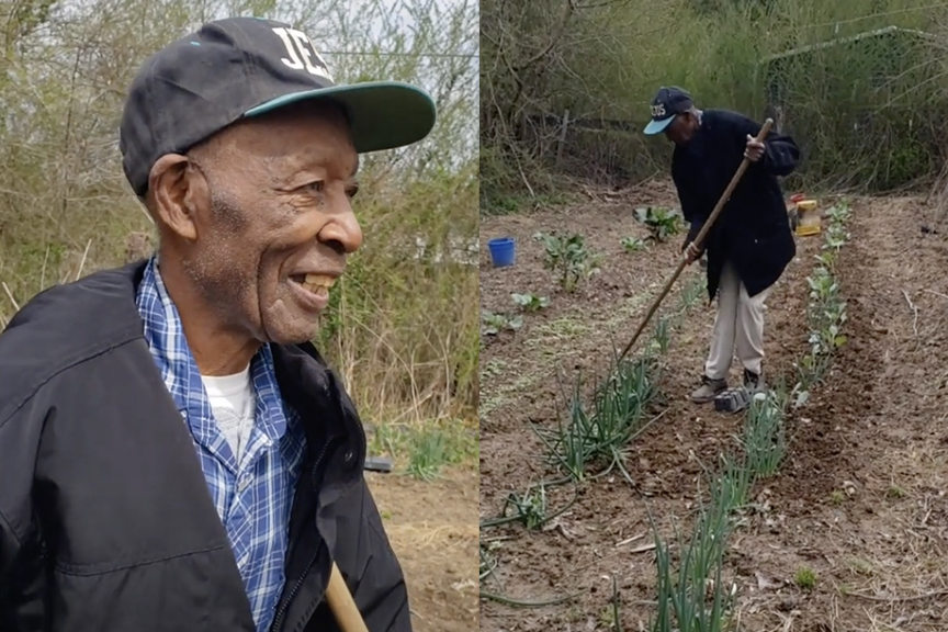 Crop 2021 at Mr. Dee Dotson's Farm in Greensboro, MS